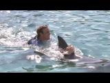 Плавание с дельфинами, Лечение после развлечения, Темные тайны вокруг дельфинов.