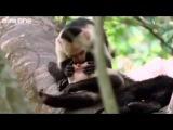 Unul dintre cele mai tari clipuri cu animale fcut vreodat