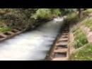 В отравленной химикатами реке в Северном Бутове погибли утки и рыба