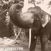 Индия и ЖИЗНЬ в Гоа