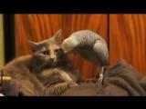 Попугай и кот_Базарама филтруй