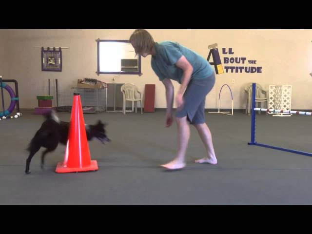Teaching Left And Right To Your Agility Dog