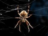 Гигантский австралийский паук атакует человека. Смотреть до конца! Жесть!