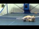 Кот играет в пинг понг cat playing ping pong