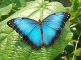 Butterfly Dance - Yanni