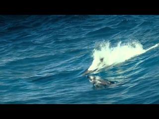 Oxygene - The Ocean