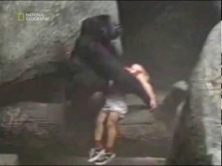 Мальчика спасла обезьяна