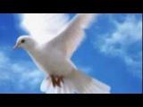 Ринат Сафин - Белый Голубь