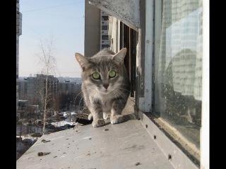 Кошак против Соседа