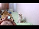 Кот слушает гимн России стоя ПАТРИОТ