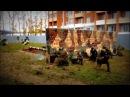 Тактические учения ОМОН \ Russian OMON demonstrated defence and tactic