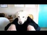 Собака ест руками