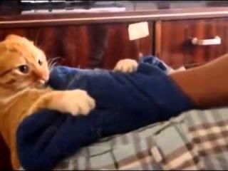В интернете стремительно набирает популярность ролик про мстительного кота   Новости Челябинска   Но