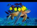 Подводный мир Азорских островов /очень интересно/