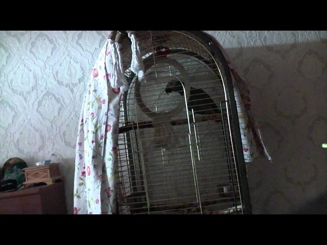 Попугай ругает ребенка 1 сезон 1 серия