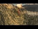 Дикая природа Германии (серия 1)