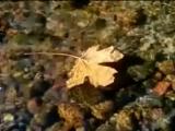 Осень и Вангелис (Vangelis - La petite fille de la mer)