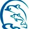 Дельфинарий г. Наб. Челны. Плавание с дельфинами