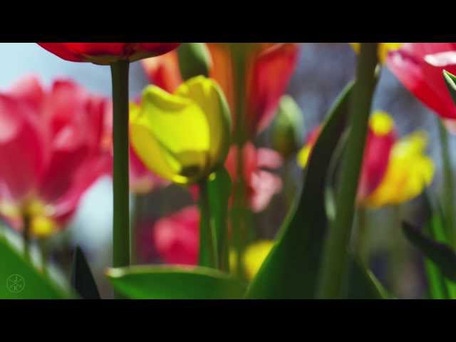 SPRING 4K (ULTRA HD)