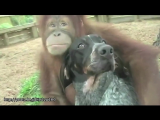 Несколько коротких сюжетов о необычной дружбе между животными