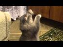 Dancing cat / Танцующий кот
