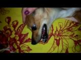 Хучик, улыбнись :)