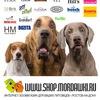 Интернет-зоомагазин www.shop.mordawki.ru