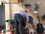 Кот жестоко отомстил своему хозяину за грубое обращение и стал героем интернета