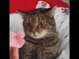 Не тюльпаны и не лилии...