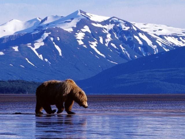 РЧВ №21 Почему Россия продала Аляску США