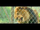 Мы купили зоопарк (We Bought a Zoo) (2011) Русский трейлер