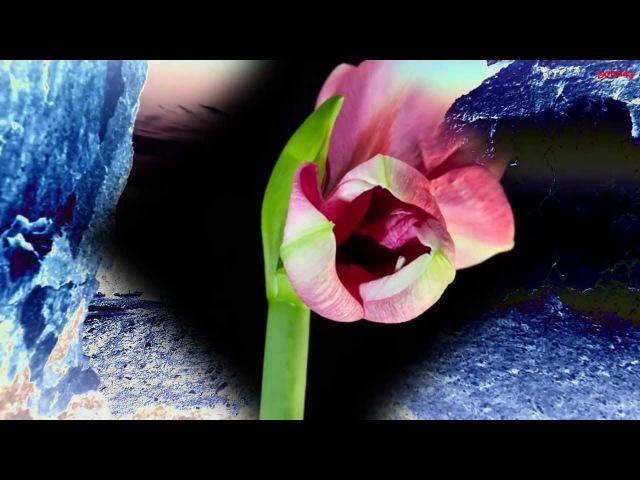 Зинаида Гиппиус - Любовь
