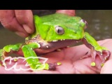 Tripping on Hallucinogenic Frogs (Part 13)