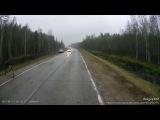 Неконтролируемая опасность   Животные на дороге   Animals on the road