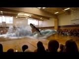 кит в зале