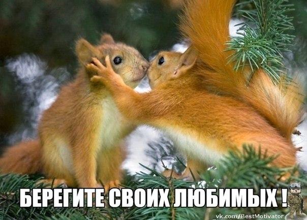 https://pp.vk.me/c624226/v624226770/1a059/GDWO2V0grvw.jpg