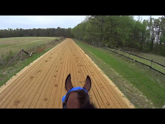 Jockey Cam Horse FAST Galloping 44mph. GoPro