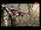 Тайны чеченской войны. Волчьи ворота