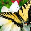 Выставка живых тропических бабочек и птичек
