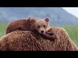 Медвежья жизнь