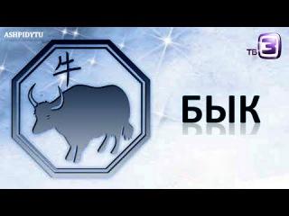 Китайский Гороскоп на ТВ3 - Бык (2 Серия от ASHPIDYTU в 2015)