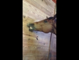 Ben the horse vs. duct tape