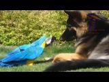 коты,собаки и попугаи