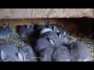 Крольчата в норе и в вольере  Клетка для кроликов