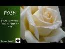 Простой способ выращивания роз из черенков. Часть 1-Осень