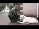 Про адресники для собак