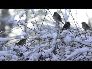 Поль Мориа - Падает снег / Paul Mauriat - Tombe La Neige
