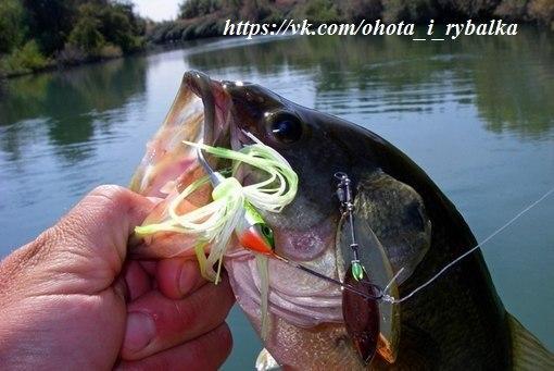 для приманки рыбы