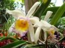 музыка для релаксации  красивая музыка и цветы орхидеи
