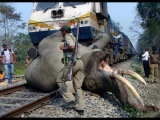 Такое вы еще не видели!!! Ужасные аварий с животными...